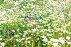 在领域的夏天野花 图库摄影