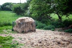 在领域的大干草捆 与堆的农村草甸领域干草 农业概念图象有风景视图 村庄风景wi 库存照片