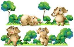 在领域的大象 库存例证