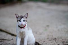 在领域的小的猫 免版税库存照片