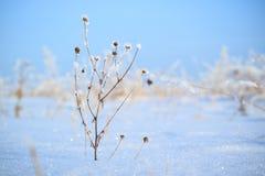 在领域的干草刀片在强的霜在雪附近的冬天,蓝天背景 库存图片
