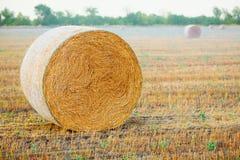 在领域的干草捆在收获以后 库存照片