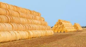 在领域的干草捆在收获以后 库存图片