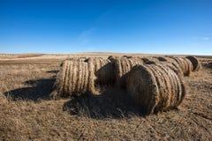 在领域的干草捆绑 图库摄影