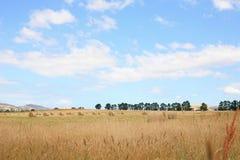 在领域的干草捆 免版税库存照片