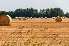 在领域的干草捆 库存照片