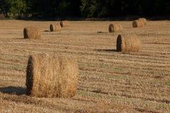在领域的干草捆 库存图片