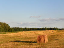 在领域的方形的haybales在夏天收获期间 免版税库存照片
