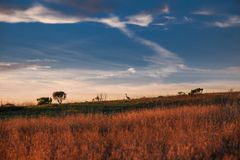 在领域的日落与鸟剪影在天际的 免版税库存图片