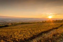 在领域的日落在克罗地亚 免版税库存图片