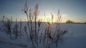 在领域的日落在冬天的晚上,时间间隔4K 股票视频