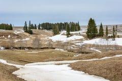 在领域的早期的春天 库存图片