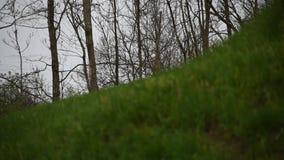 在领域的早期的春雨 影视素材