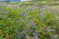 在领域的明亮的紫色野花 库存图片