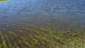 在领域的春天洪水 Agroculture 股票录像
