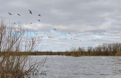在领域的春天洪水 免版税库存照片