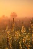 在领域的有薄雾的日出 免版税库存图片