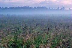 在领域的有雾的日落 免版税图库摄影
