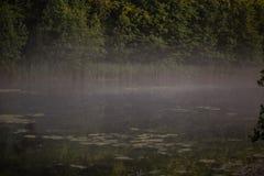 在领域的有雾的早晨在夏天 库存照片