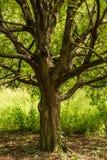 在领域的树与草 免版税库存图片