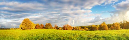 在领域的树在秋天 库存照片
