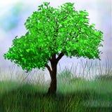 在领域的树 免版税库存照片