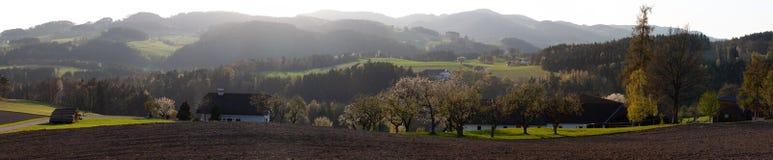 在领域的樱桃树和小山在诺伊马尔克im Muehlkreis 免版税库存图片