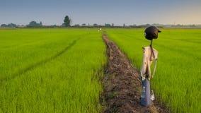 在领域的泰国稻草人,在一个领域的泰国稻草人在日落, 库存照片