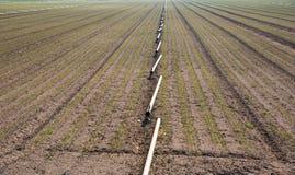 在领域的灌溉系统 图库摄影