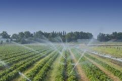 在领域的灌溉 免版税库存照片