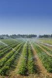 在领域的灌溉 免版税库存图片
