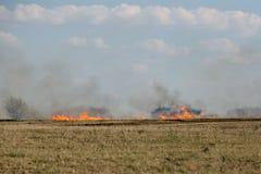 在领域的灼烧的草 库存照片