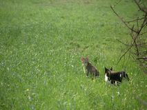 在领域的猫 影视素材