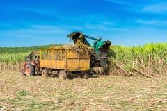 在领域的甘蔗收获与联合收割机- Serie古巴报告文学 库存图片