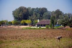在领域的白马与房子 免版税库存照片