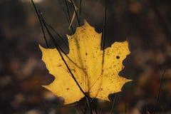 在领域的秋天叶子 图库摄影