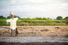 在领域的稻草人用于追逐鸟 库存图片