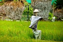 在领域的稻草人 库存照片