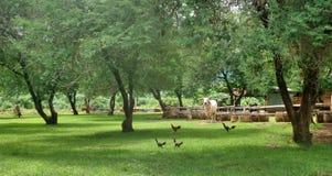 在领域的简单的农村生活 库存照片