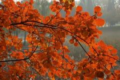 在领域的红色叶子 图库摄影