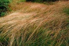 在领域的绿色和干草 放牧抽象背景 免版税库存照片