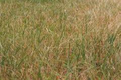 在领域的绿色和黄色野草 免版税库存图片