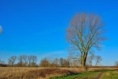 在领域的美丽的树 免版税库存照片