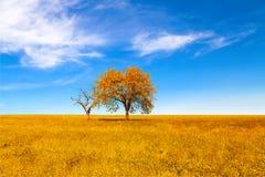 在领域的美丽的秋天树 秋天横向 免版税库存图片