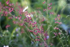 在领域的美丽的红色花 免版税库存照片