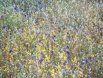 在领域的美丽的草花 免版税库存图片