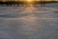 在领域的美好的冬天风景 在明亮的毛皮红色星期日之上日落冠上结构树冬天 图库摄影