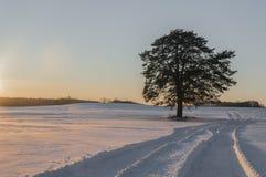 在领域的美好的冬天风景 在明亮的毛皮红色星期日之上日落冠上结构树冬天 库存图片
