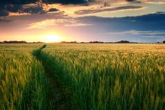 在领域的美好的日落与对太阳、夏天风景、明亮的五颜六色的天空和云彩的路作为背景,绿色麦子 库存图片