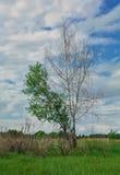 在领域的美好的简单的天空天际 免版税库存图片